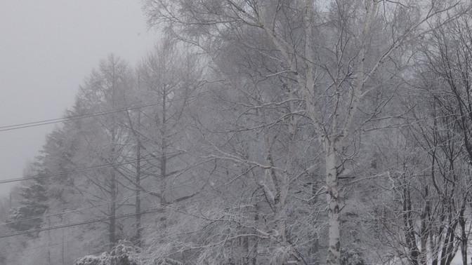 冬じゃん。