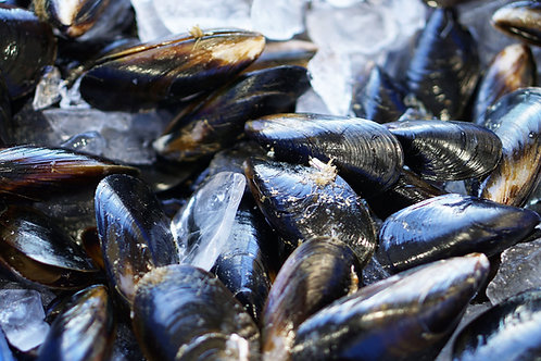 Fresh Black Mussels