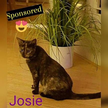 Josie.jpg