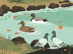 50 Adventures - Ducks