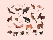 50 Adventures - Animals