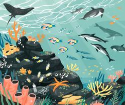 Underwater Animals - 50 Adventures in the 50 States