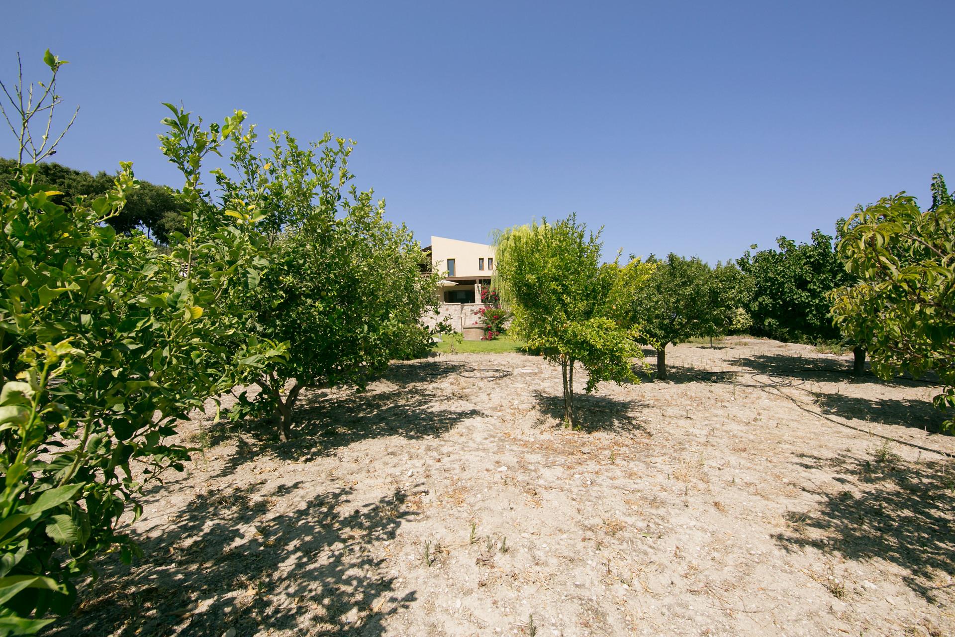 Villa Russelia_Rhodes_trees_5
