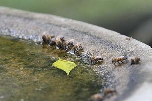 pollinators 3.jpg