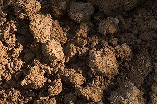 healthy soil 1.jpg