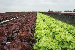 different fertilier- big farm.jpg