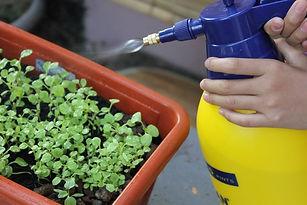 foliar feed- spraying plant.jpg