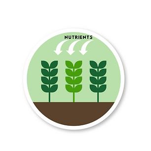 why foliar feed 2.png