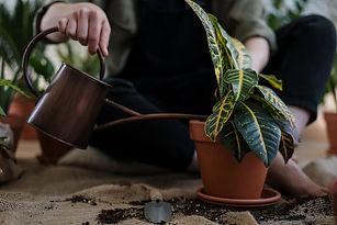 watering basics houseplant.jpeg