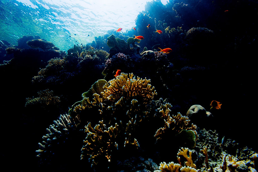 Reef - Red Sea