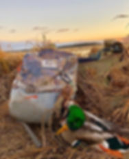 Mallard Duck | Green head | Fooded Field
