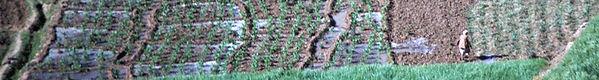 fieldcropped.jpg