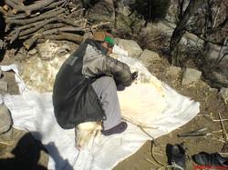 Wool cutting