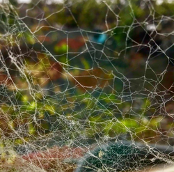The site of the web