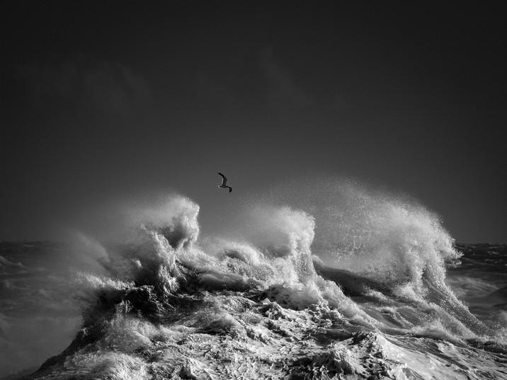 High Seas-7.jpg