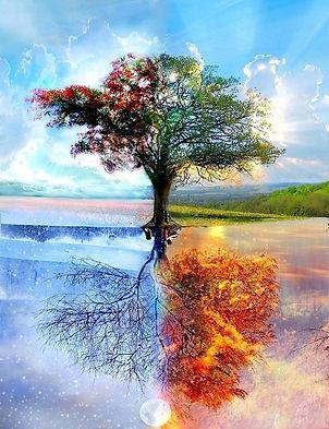 תמונה - גזעים וענפים.jpg