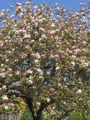 blossom 2 Chris.jpg