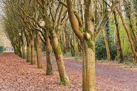 avenue of trees.jpg