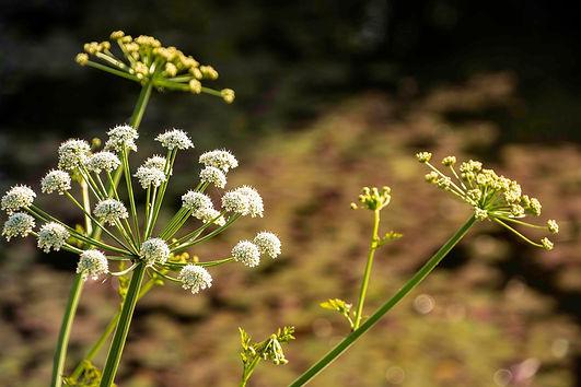 weed A4.jpg