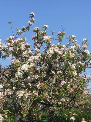 blossom 3 Chris.jpg
