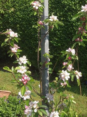 blossom Chris.jpg