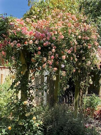 rambling rose.jpg