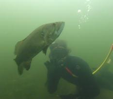milfoil crew scuba fish 2019.png