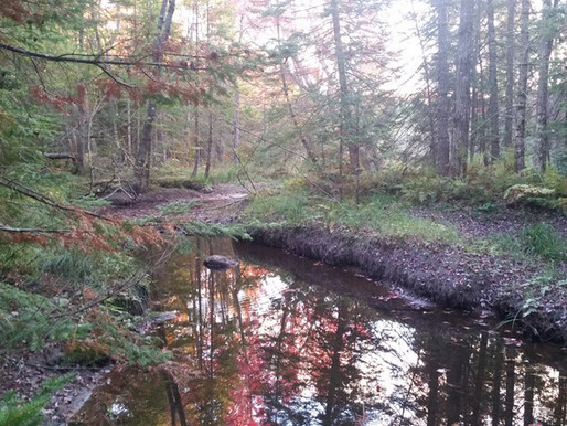 7 Lakes Alliance's First Conservation Property in North Pond Watershed