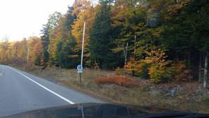 Moose Sighting Near 7 Lakes Property