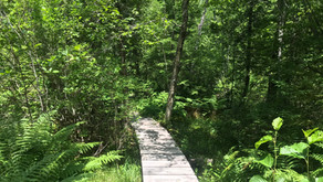 Fogg Island Preserve: A Reflection on the Importance of Land Trusts