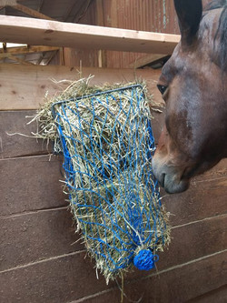 Who filled this hay net_