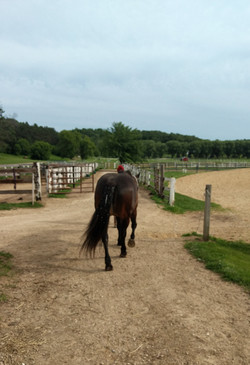 Heading out to the pasture