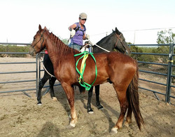 The Ribbon Wand in use while in saddle.