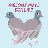 6-pigeonsmateforlife-v1-title.png