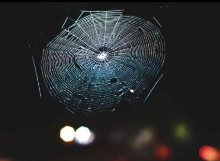 Bilim İnsanları Örümcek Ağlarını Müziğe Çevirdi ve Çarpıcı Sonuçlar