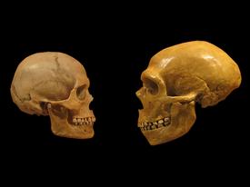 Neandertal DNA'sı, Bazı Modern İnsanlarda Bir Dizi Özelliğe Katkıda Bulunur