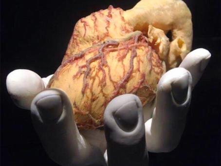 Kalbini Dinle? Bu Olağanüstü Organın Gerçekte Ne Yapıyor…