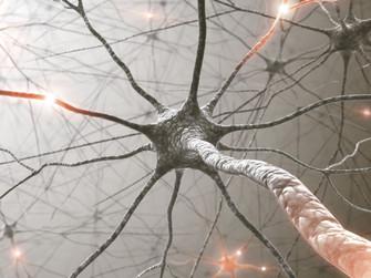 Beyinde Kaç Nöron Vardır?