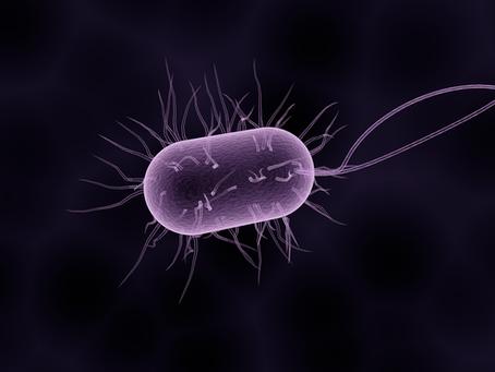 Uluslararası Uzay İstasyonunda Yeni Mikrop Türleri Keşfedildi