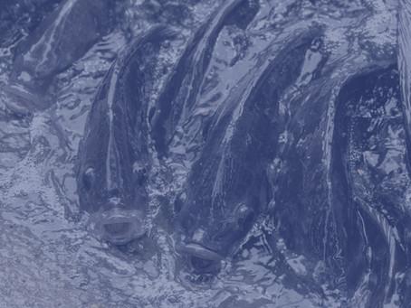 Bilim İnsanları Ay'da Çiftlik Balıklarını Öneriyor