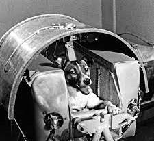 Laika Uzaya Çıkan İlk Hayvandı
