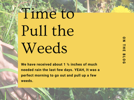 Time to Pull the Weeds