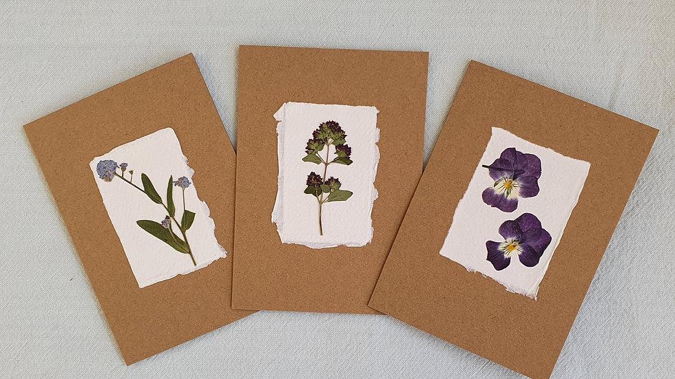 Pressed flower cards (Herb Multipack x3)