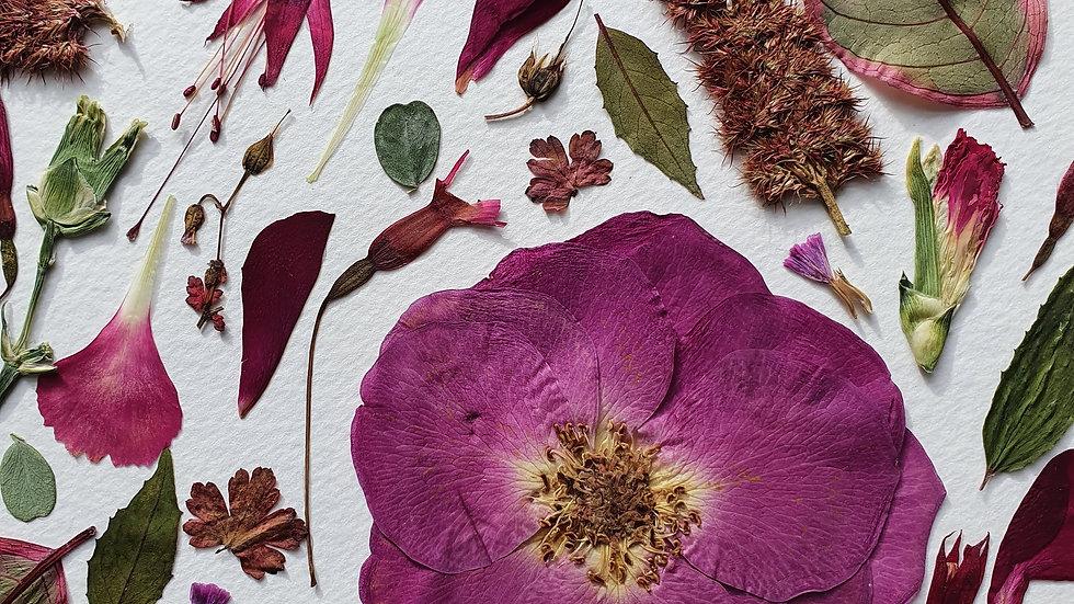 'Botanical Pinks' Pressed Flower Frame