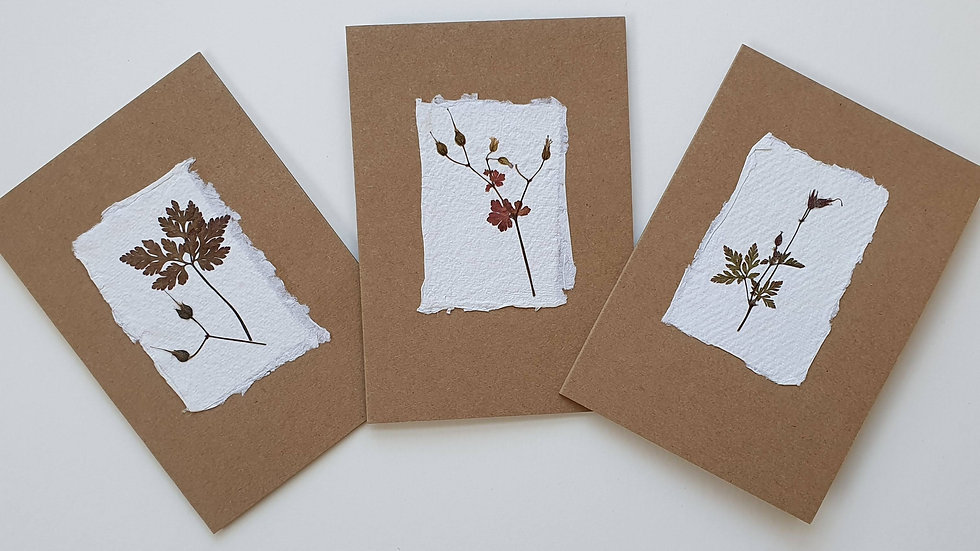 Pressed flower cards (Natural Multipack x3)