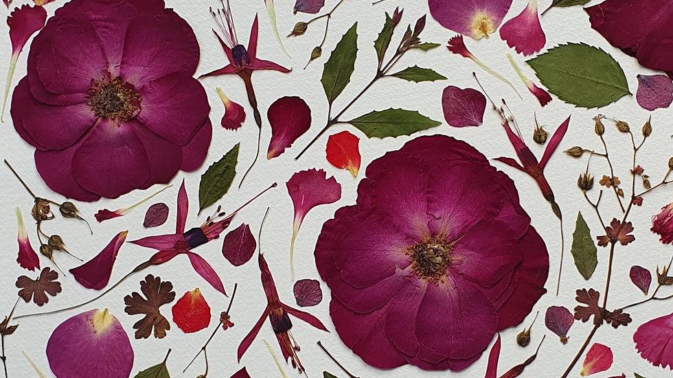 'Wild Rose' Pressed Flower Frame