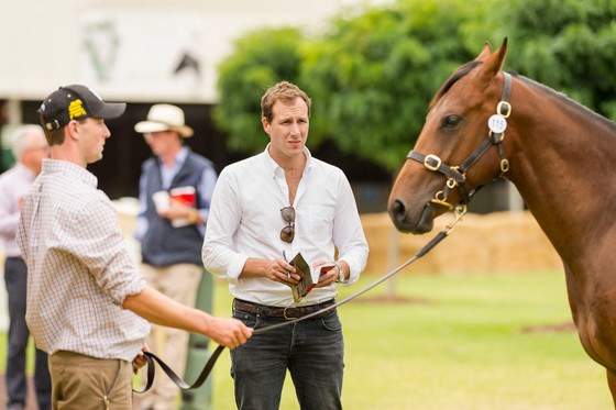 Launch of Andrew Williams Bloodstock
