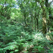 Ancient Oak Groves