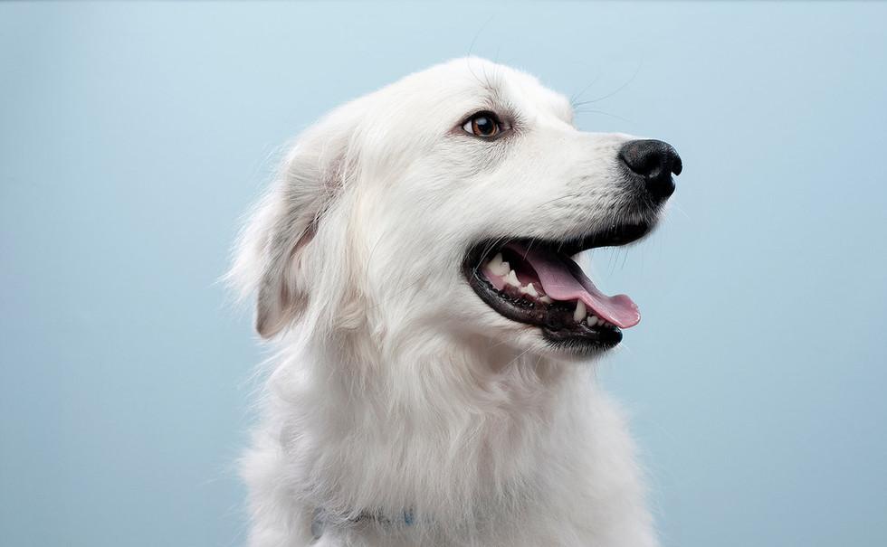 Cachorro.jpg