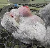 tratamentos-roedores-3.jpg